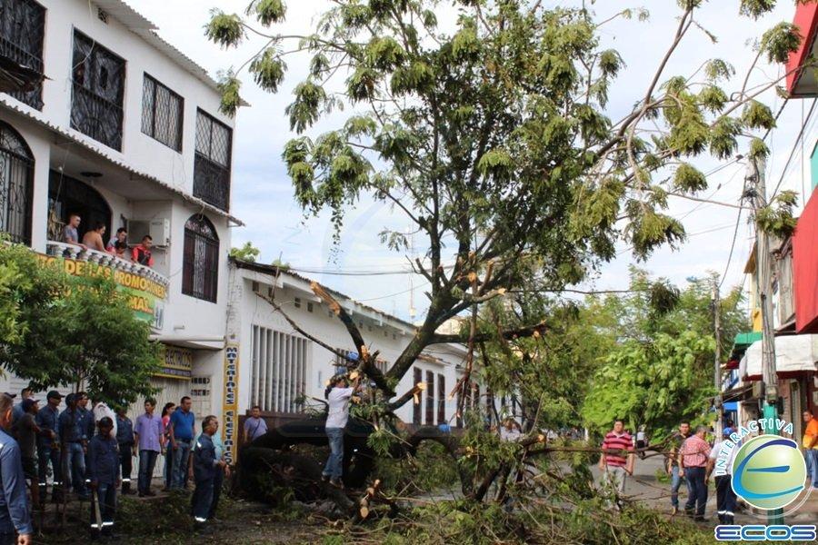 HD- Emergencia árbol caído-3 de octubre
