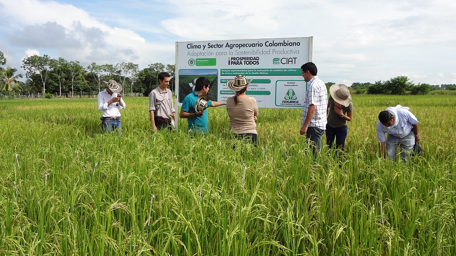 Politica publica sector rural Ibagué