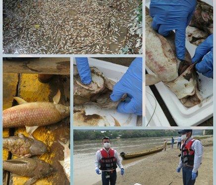 Preocupación por mortandad de peces en el río Magdalena