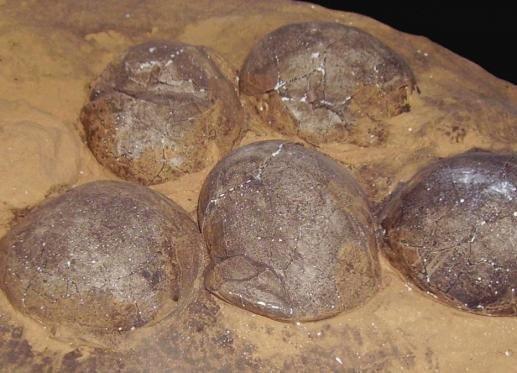 Hallan huevos de dinosaurio que datan de hace 70 millones de años