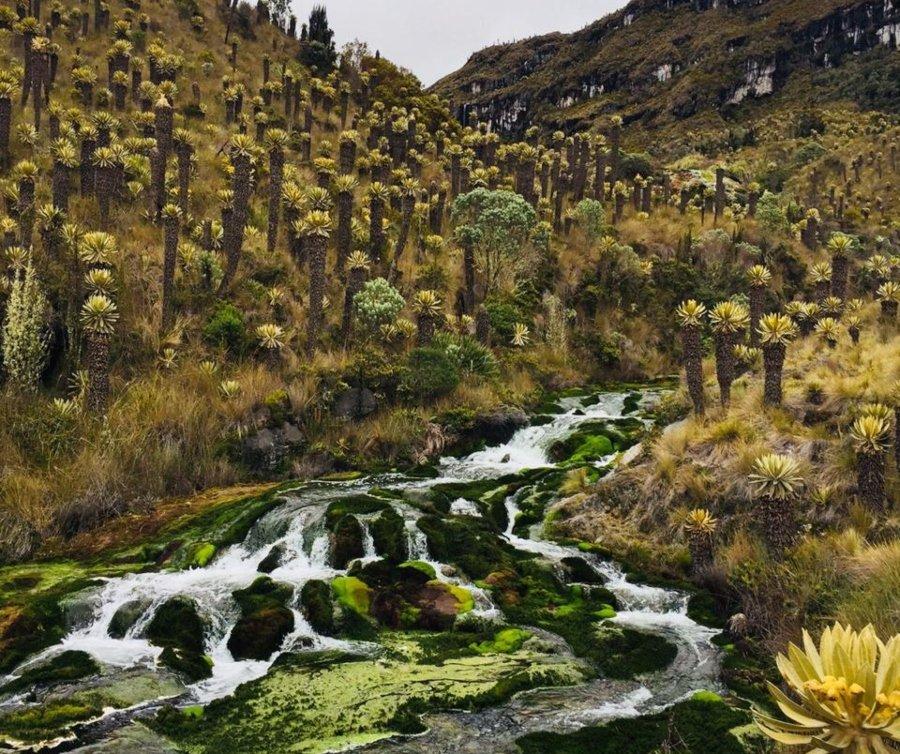 """Se fortalece el proyecto Páramo """"Los Nevados"""" como turismo de naturaleza en el Tolima - Ecos del Combeima"""