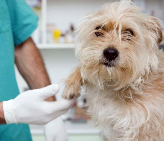 No se pierda hoy la gran brigada de salud veterinaria en el Cañón del Combeima