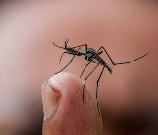 Ibagué tiene 335 casos probables de dengue