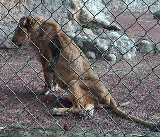 Zoológico venezolano mata animales enfermos para alimentar otras especies