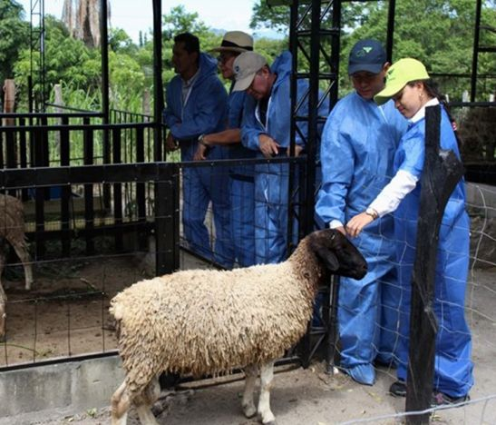 En el Tolima, el ICA dicta taller sobre sanidad e implementación de Buenas Prácticas Ganaderas en la producción de ovinos y caprinos