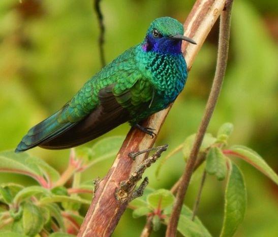 Tolima, un paraíso colmado de aves