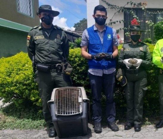 Policía y Cortolima adelantaron actividades de prevención al tráfico de fauna silvestre