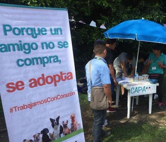 Hoy habrá una nueva jornada de adopción canina en Ibagué