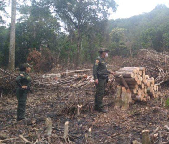 Policía Metropolitana intervino un lote en el que estaban realizando una tala indiscriminada