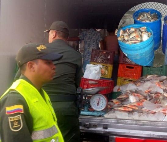 Policía Metropolitana incautó más de una tonelada de pescado en Ibagué