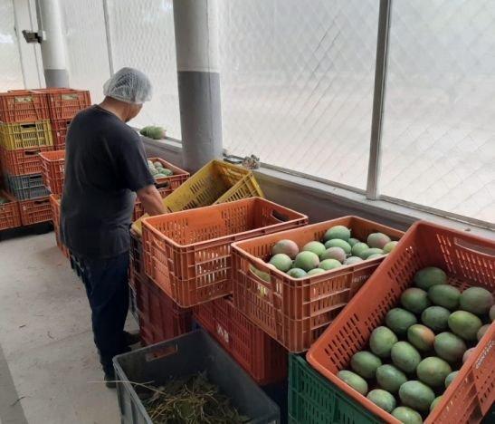 Proyecto hortofrutícola del Tolima fue seleccionado como candidato al premio Nacional de Regalías