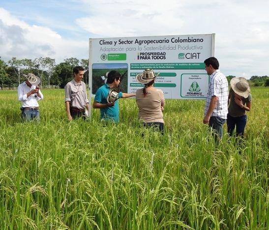 Este viernes habrá rueda de negocios para los productores de maíz y arroz