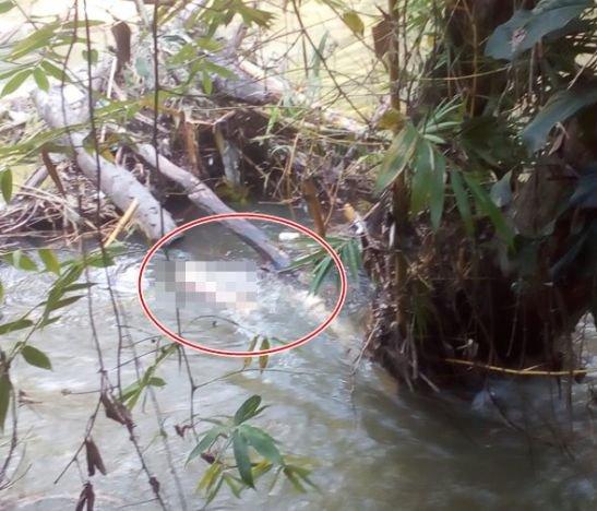 Hallan cuerpo de unhombre en avanzado estado de descomposición en zona rural  del Guamo  - Tolima