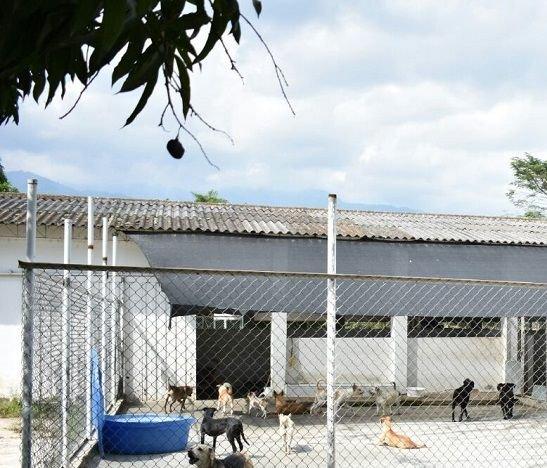 CAPA restringe la recepción de mascotas por actividades de adecuación de sus instalaciones