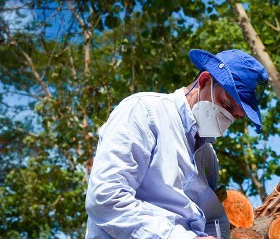 Más de mil 600 árboles tendrán que sembrar infractores ambientales de Ibagué, Piedras y San Luis