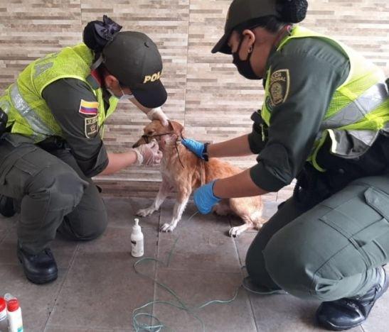 Policía departamental ha brindado comida y asistencia veterinaria perros callejeros