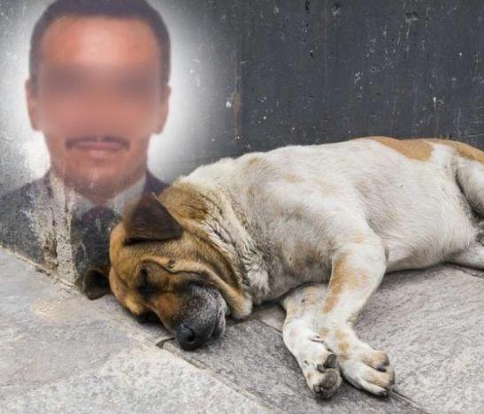 Fiscalía está judicializado a un hombre que atacó con machete a un perrito en el Tolima