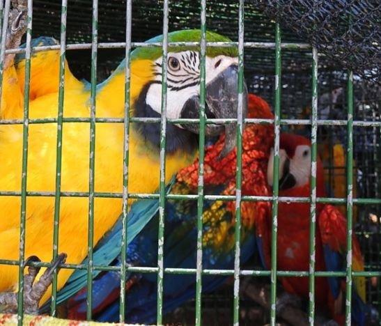 Animales de fauna silvestre fueron reubicados por Cortolima