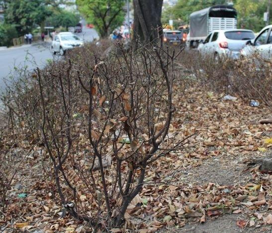 Los jardines que desaparecieron en la administración 'ambientalista'
