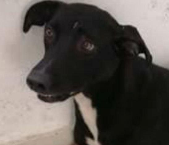 Inició proceso judicial en contra de un hombre que le disparó a un perrito en Purificación