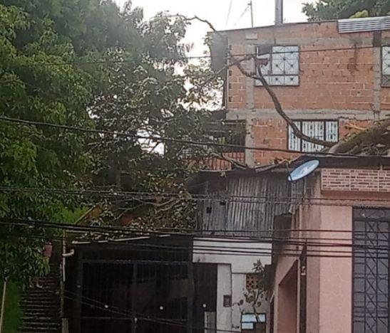Se cayó un árbol sobre dos viviendas en el sur de Ibagué