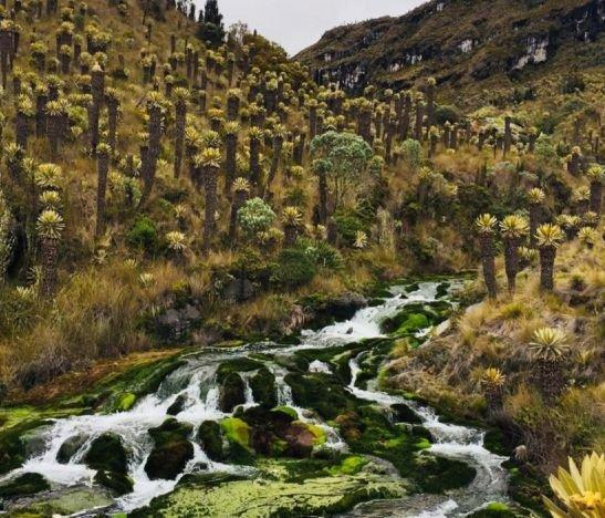 """Se fortalece el proyecto Páramo """"Los Nevados"""" como turismo de naturaleza en el Tolima"""