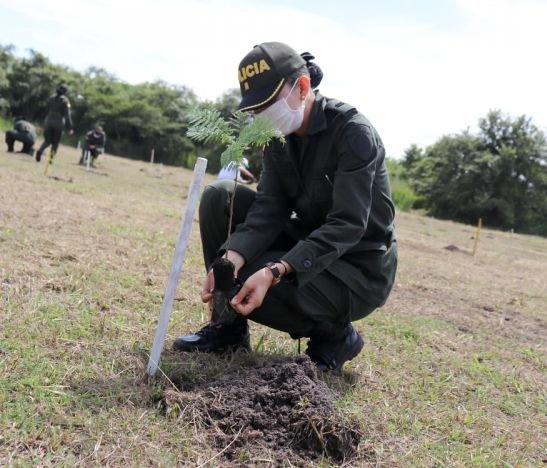 Más de 5.000 árboles se sembrarán en el CENOP