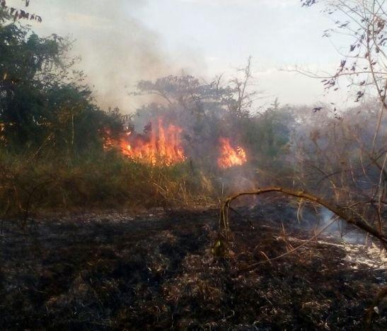 12 municipios del Tolima han sufrido conflagración en su vegetación