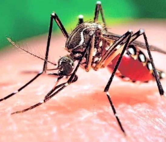 Alerta en el Tolima por casos de Dengue