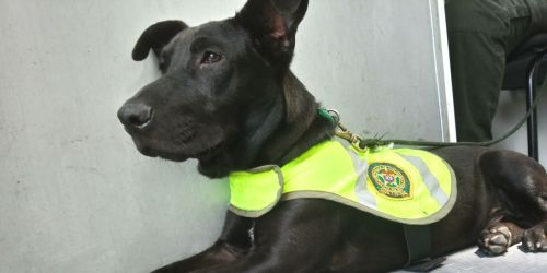 Perro de la Policía, cocaína, México
