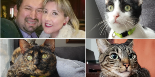 Gatos con personas montaje 6 Junio 2019