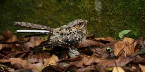 HD Fauna silvestre 23 de noviembre