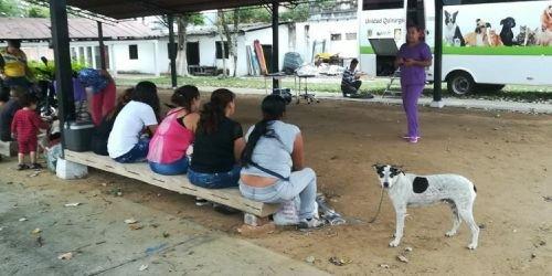 Esterilización canina